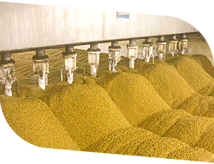 Drying of grain